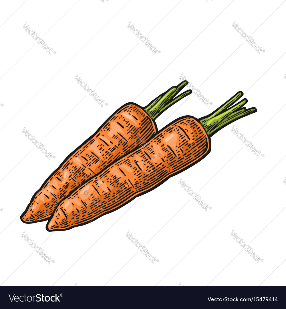 Two carrots color vintage engraved