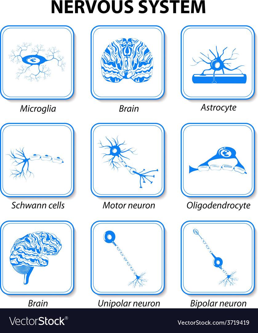Icon nervous system