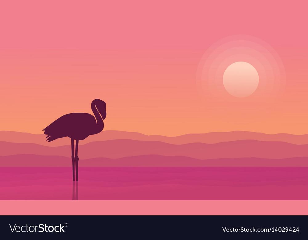 At sunrise flamingo scene silhouettes