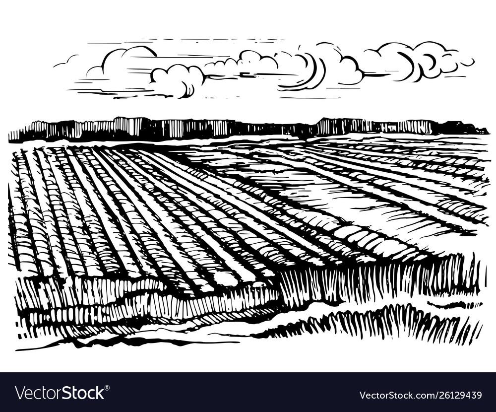 Rural landscape agricultural crops