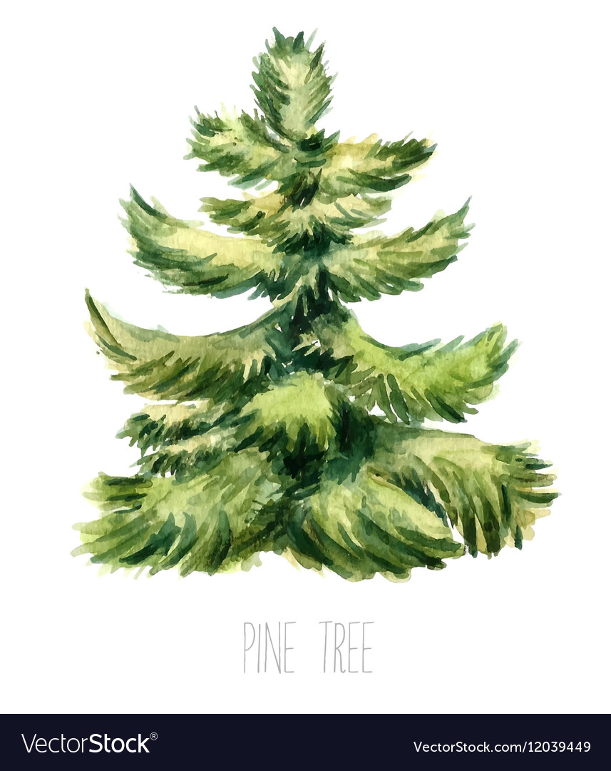 Watercolor Christmas Tree Royalty Free Vector Image