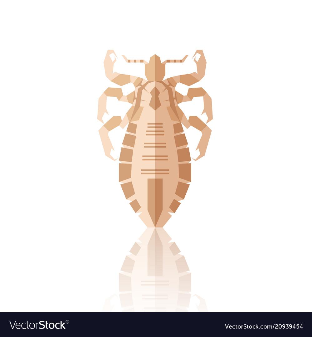 Flat geometric louse