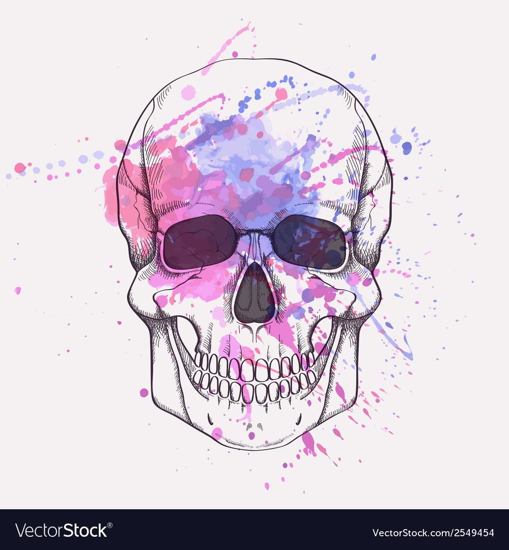 Human skull with watercolor splash