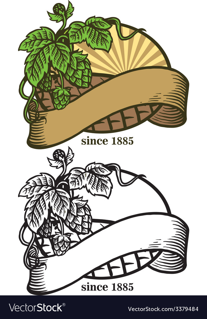 Hand drawing of hops and ribbon