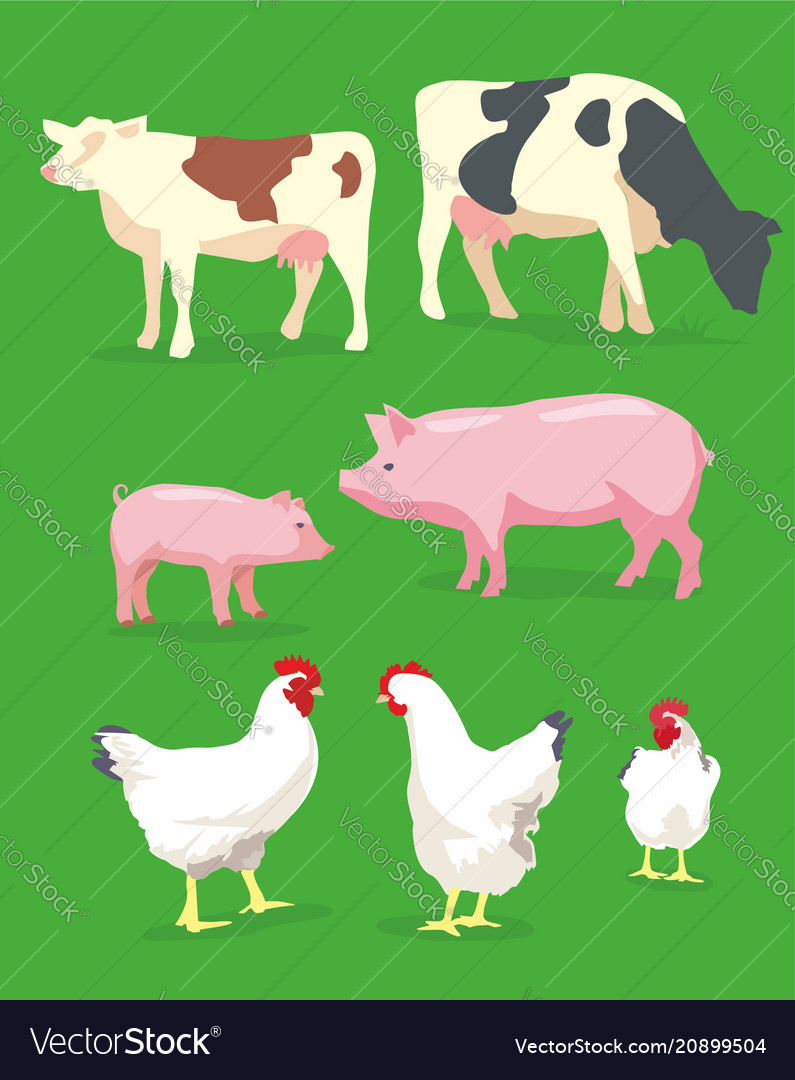 Cow pig and chicken on green background