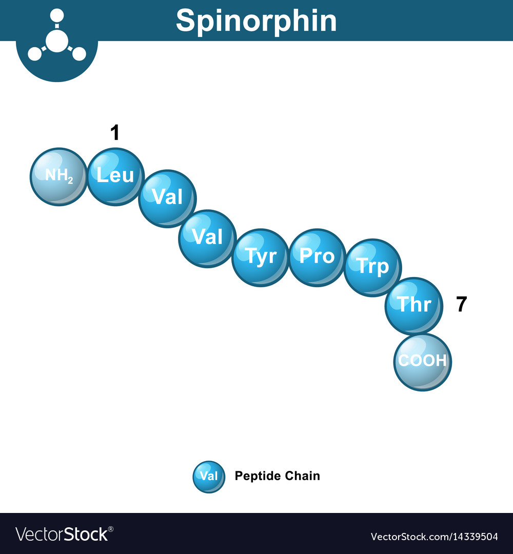 Spinorphin molecular structure amino acid sequence vector image