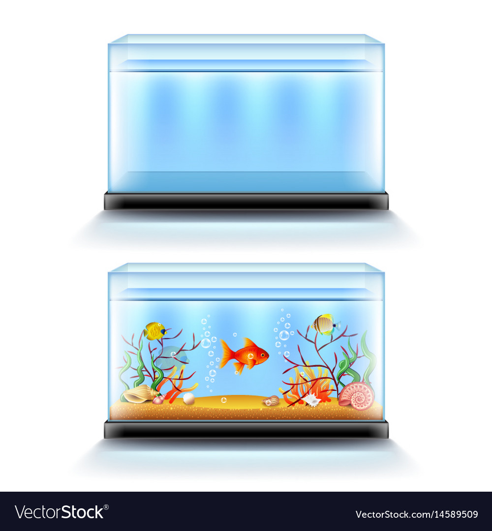 Aquarium with fish and blank isolated on white