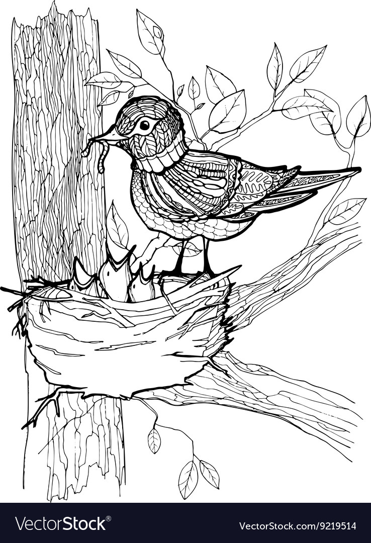 Coloring Page With Birds Royalty Free Vector Image