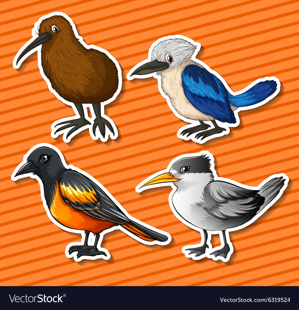 different kinds of birds Songbirds with bird calls that range from sweet-sounding to demanding, there are many types of songbirds in north america from the common american robin to the brightly-colored blue jay, learn about their habitats and hear their bird songs.