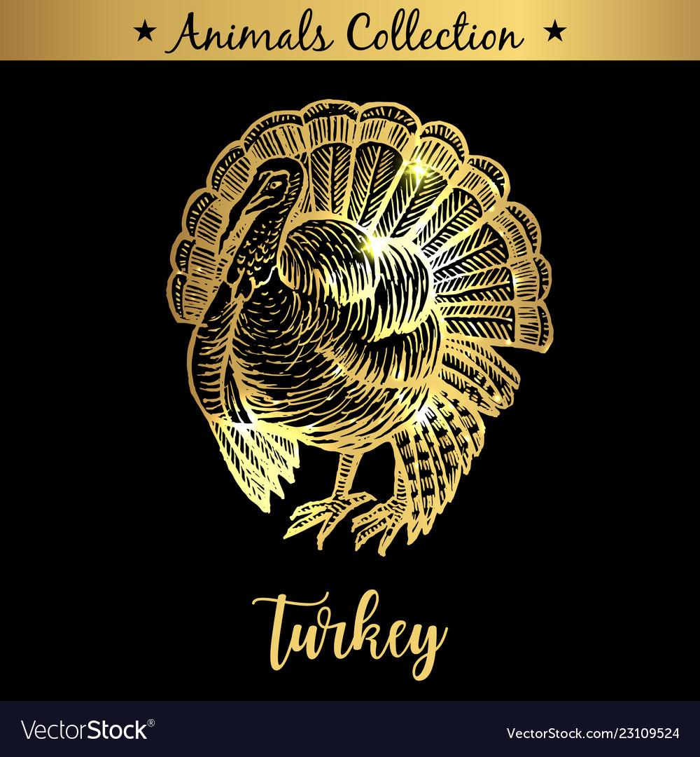 Golden and royal hand drawn emblem of farm turkey