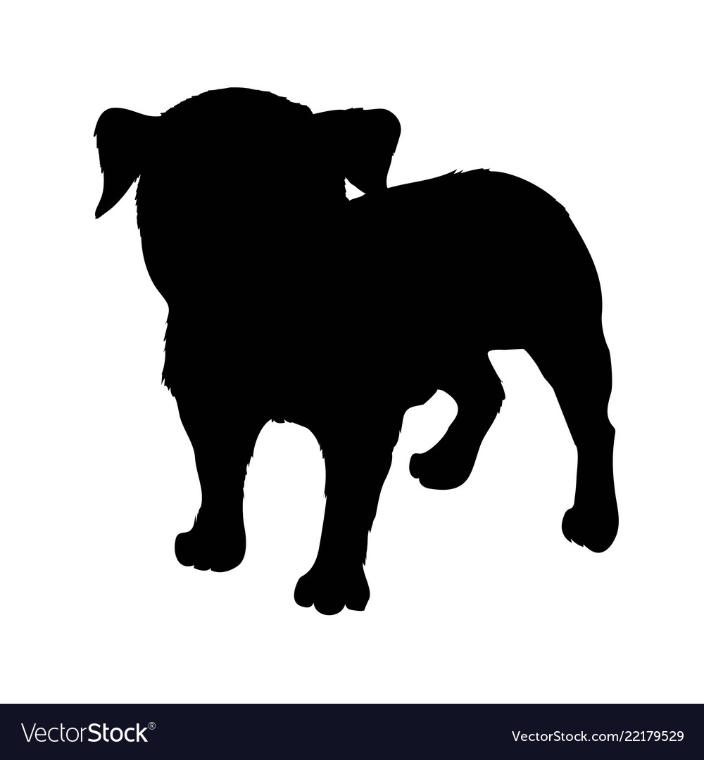 Pug purebred dog sitting in side view with shadow