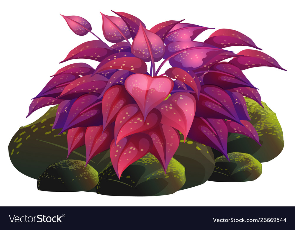 Purple Leaves And Rocks On White Background Vector Image