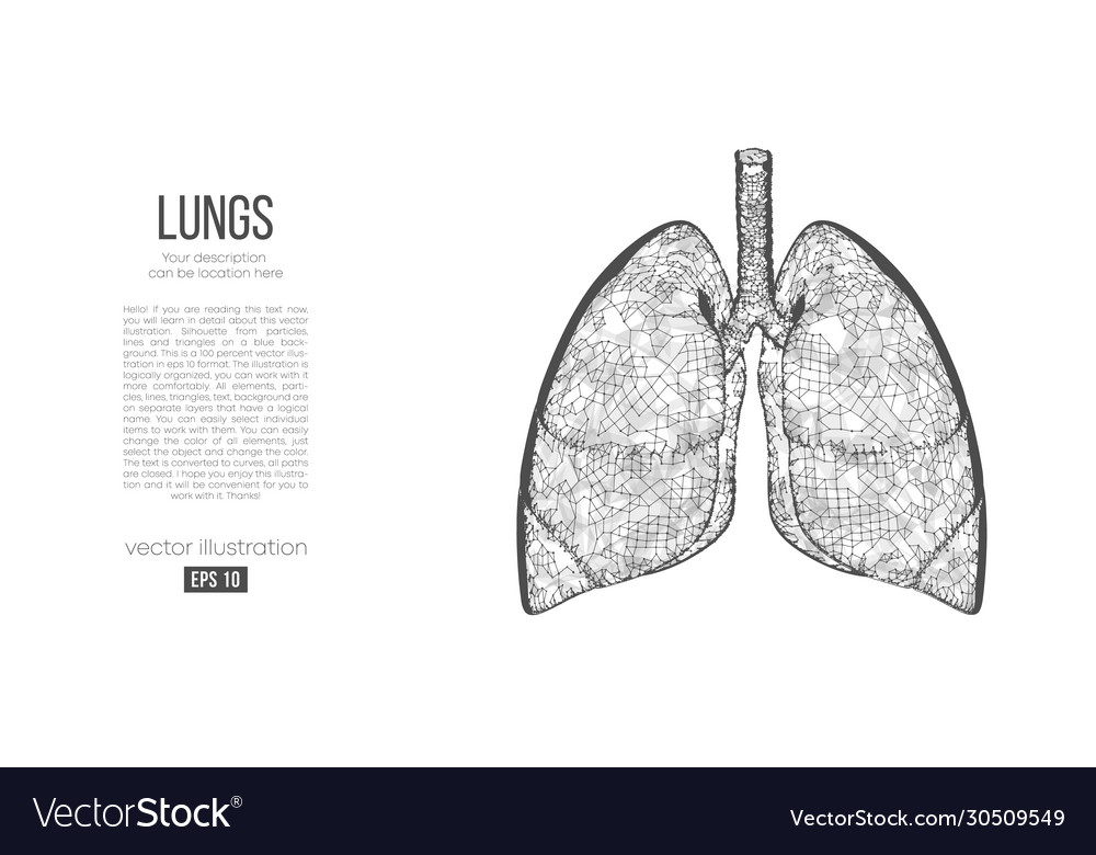 Abstract silhouette polygonal organ lungs