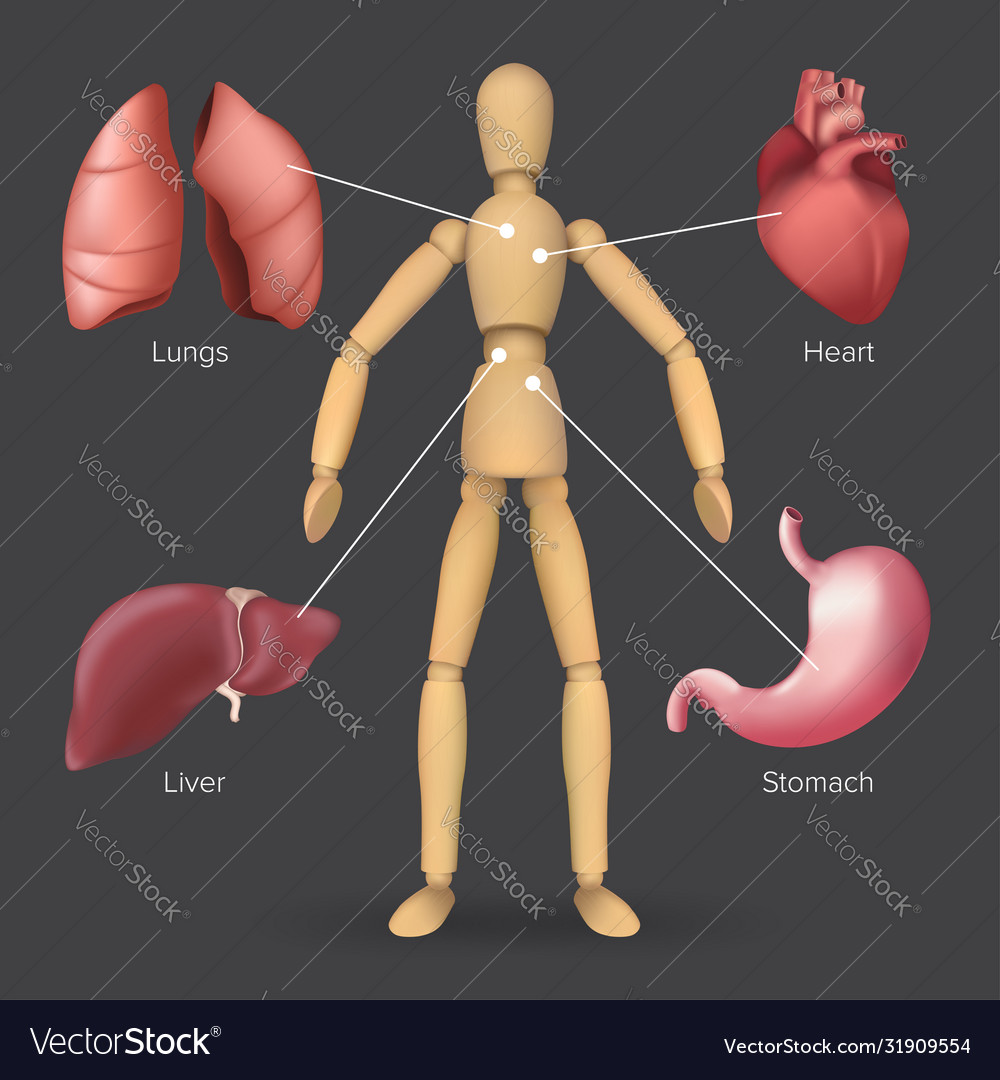Infographic with human internal organs heart