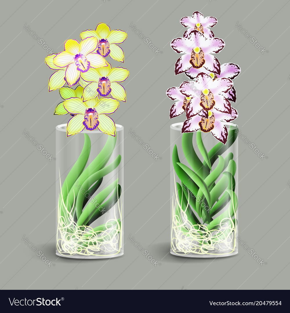 Vanda orchid in a glass vase epiphyte tropical