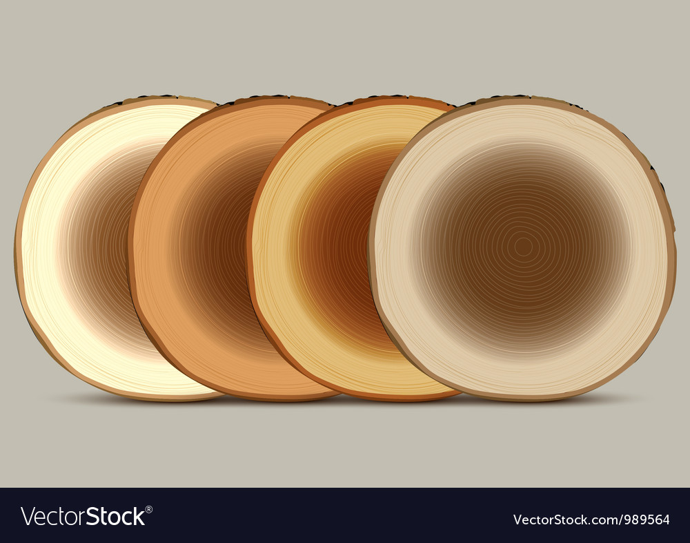 Various cross section of tree stump vector image