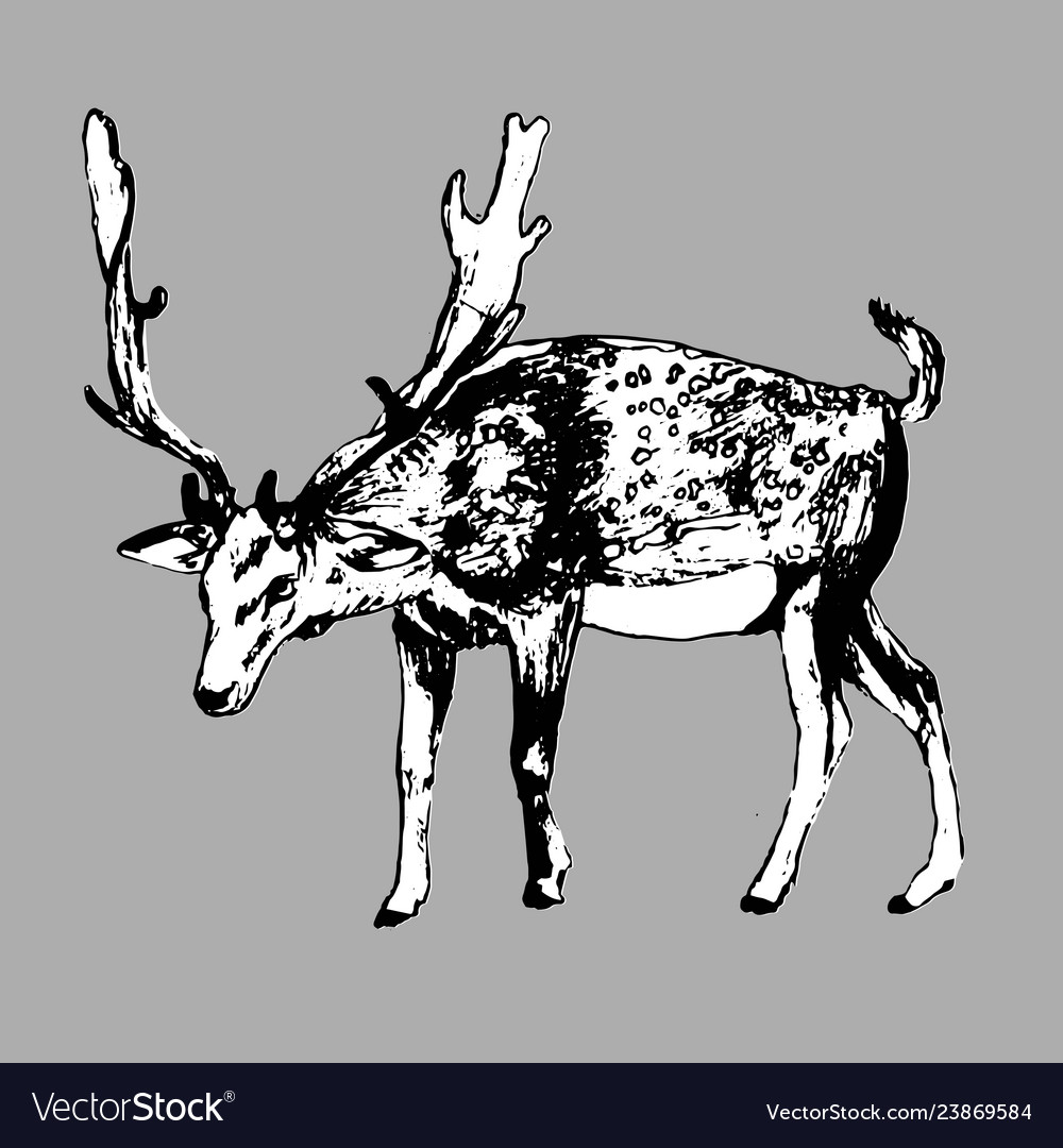 Deer hand drawn ink isolated