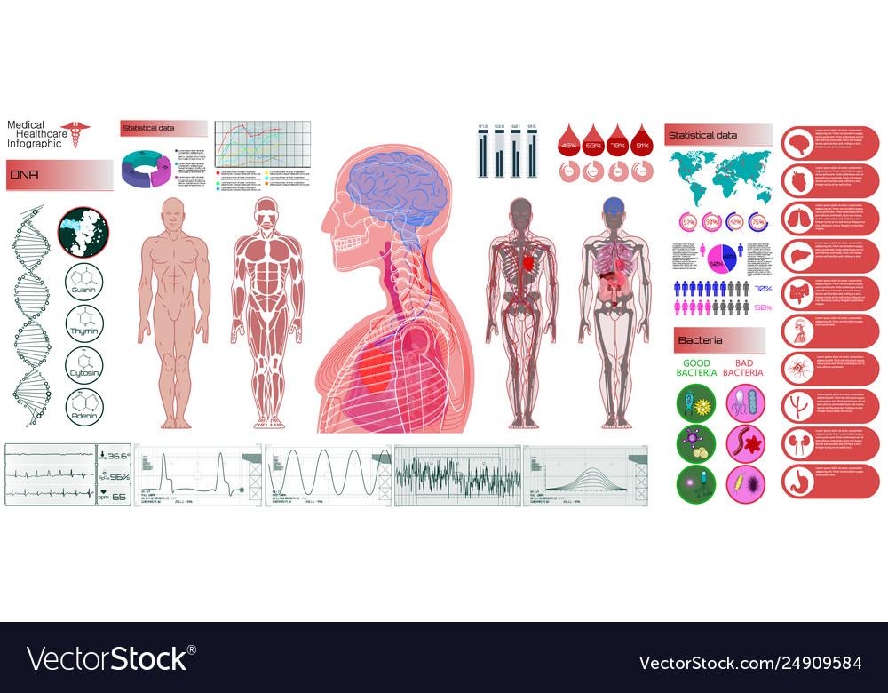 Human Anatomy Body With Internal Organs