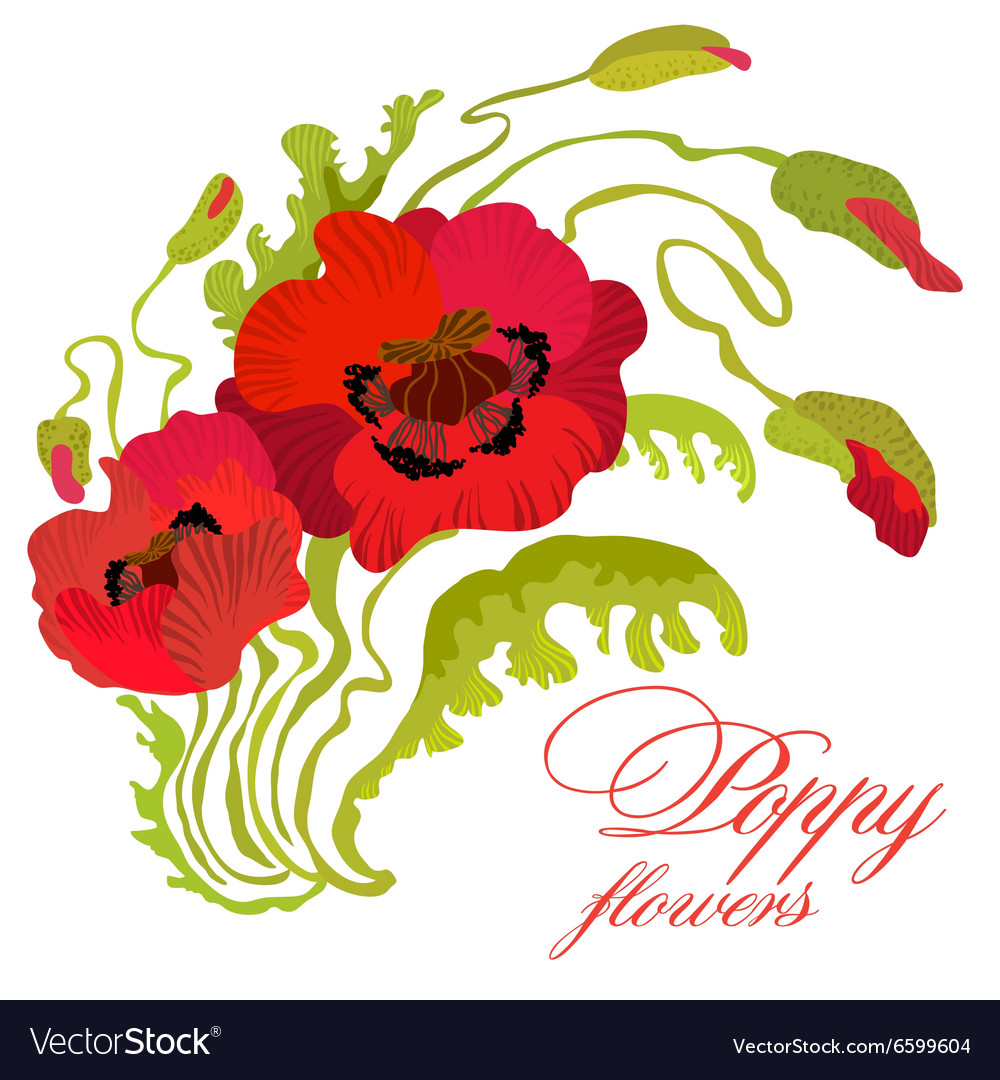 Bouquet of poppies stems leaves and buds isolated vector image mightylinksfo