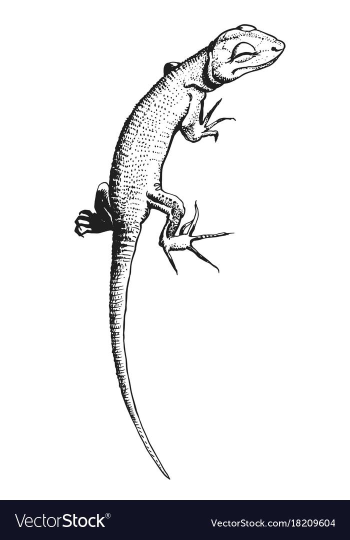 Lizard hand drawn