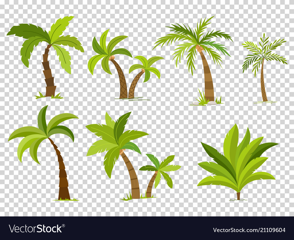 Palm trees isolated on transparent background