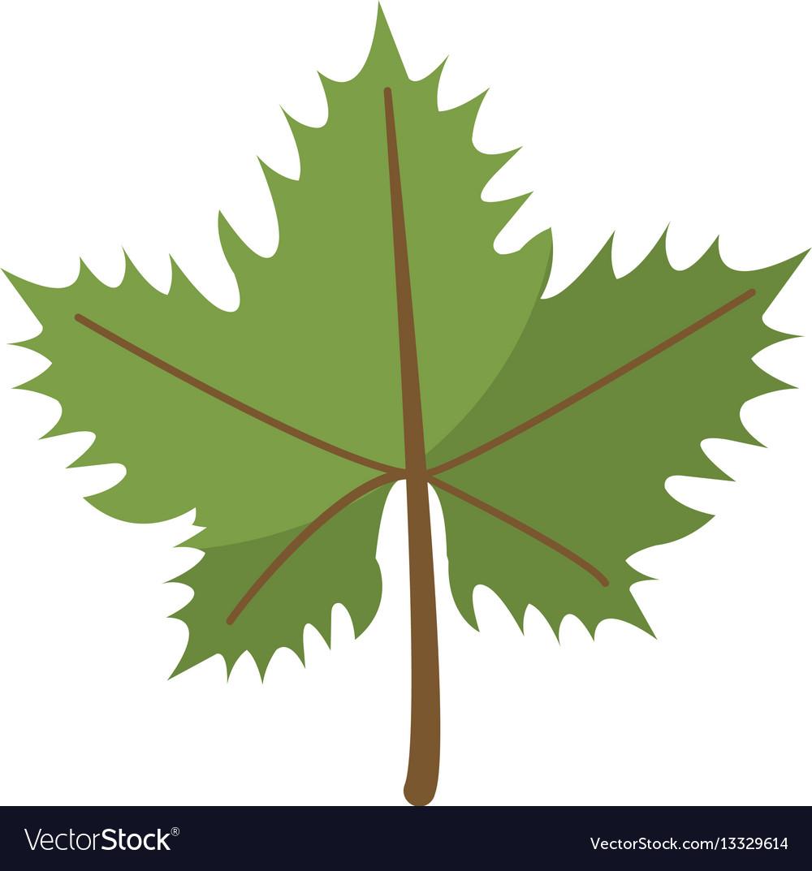 Leave grape wine symbol vector image