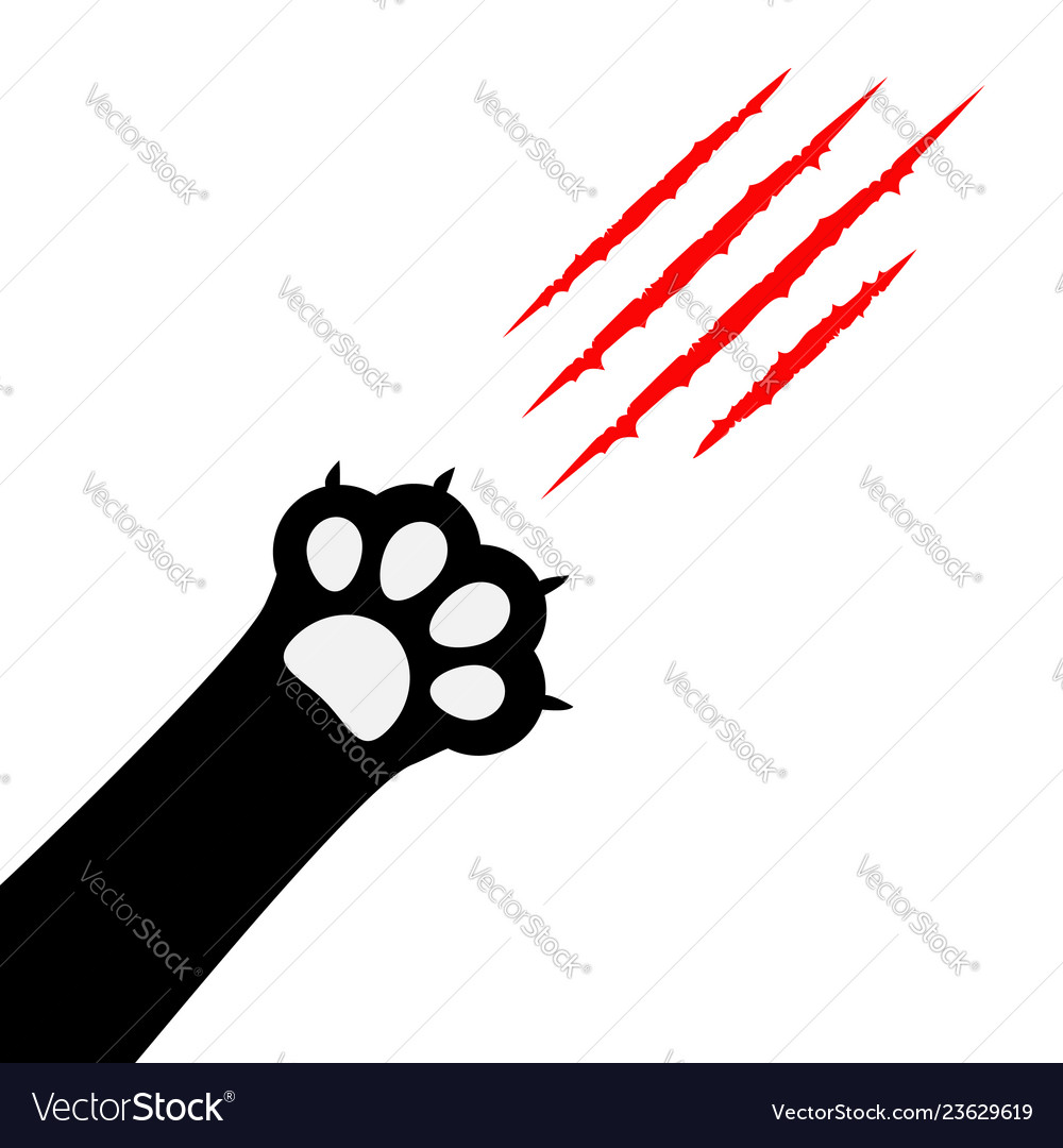 Black cat paw print leg foot bloody claws