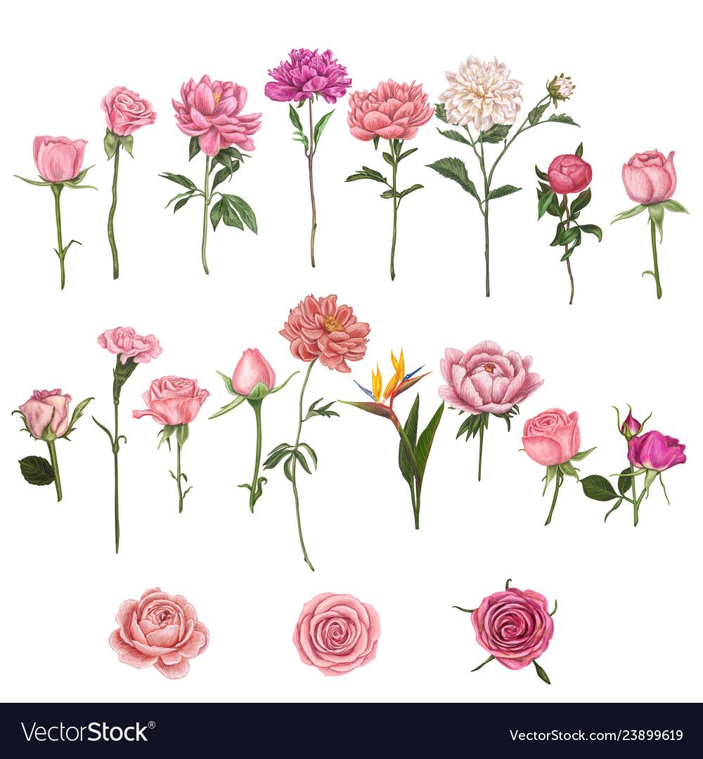 Hand drawn flower