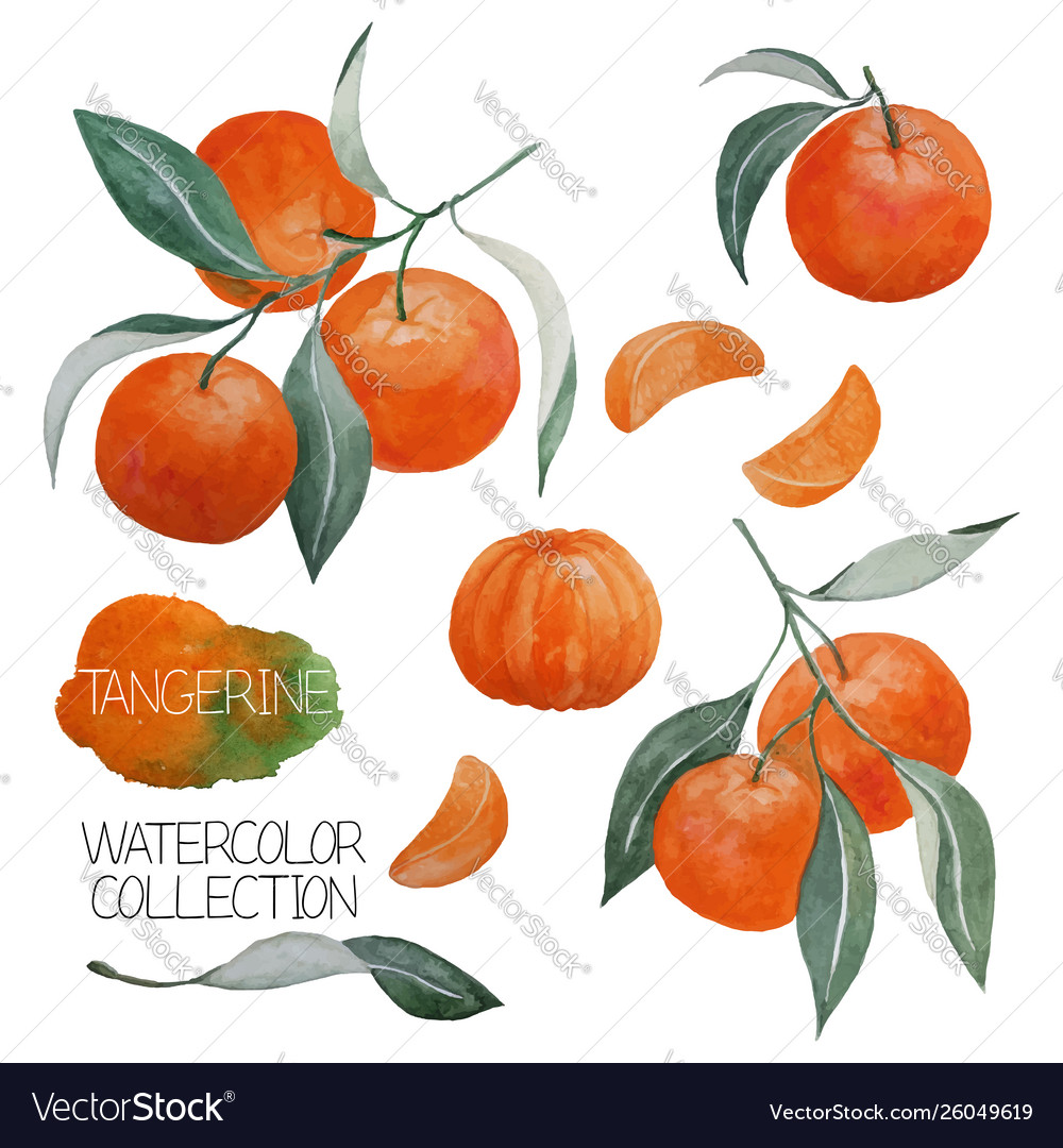 Tangerine watercolor collection