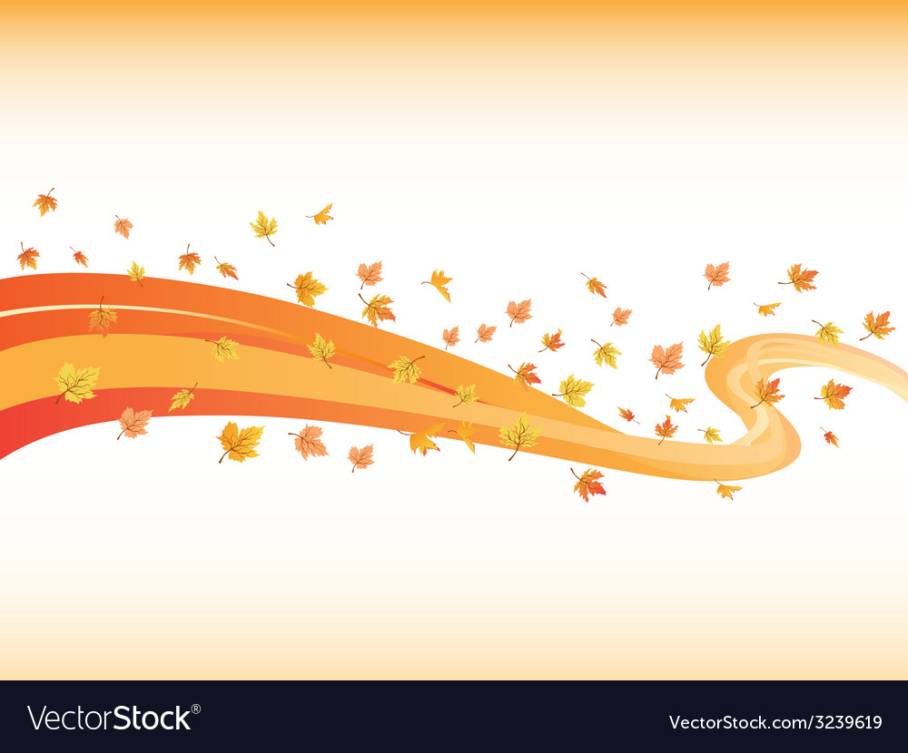 Windswept maples curve background vector image