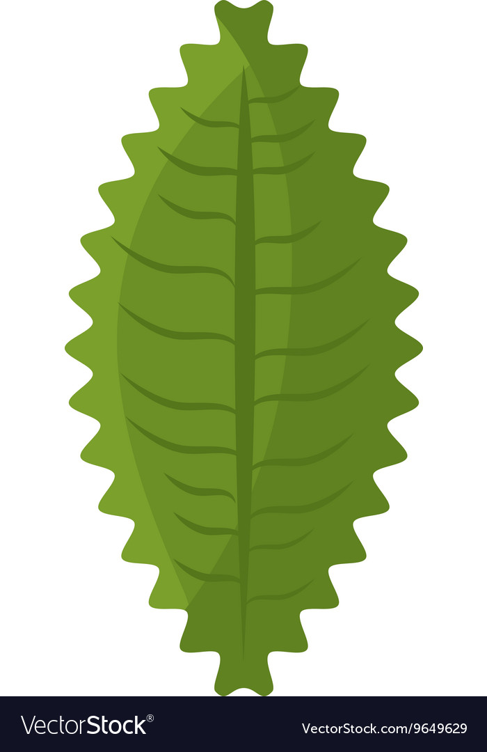 Green leaf or leaves ecology icon design