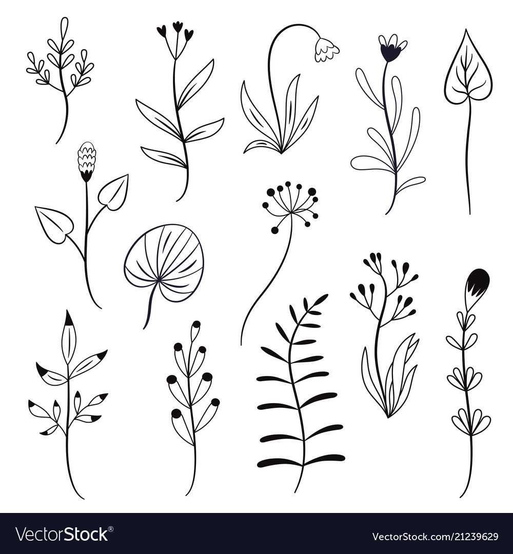 Set leaves and plants vector