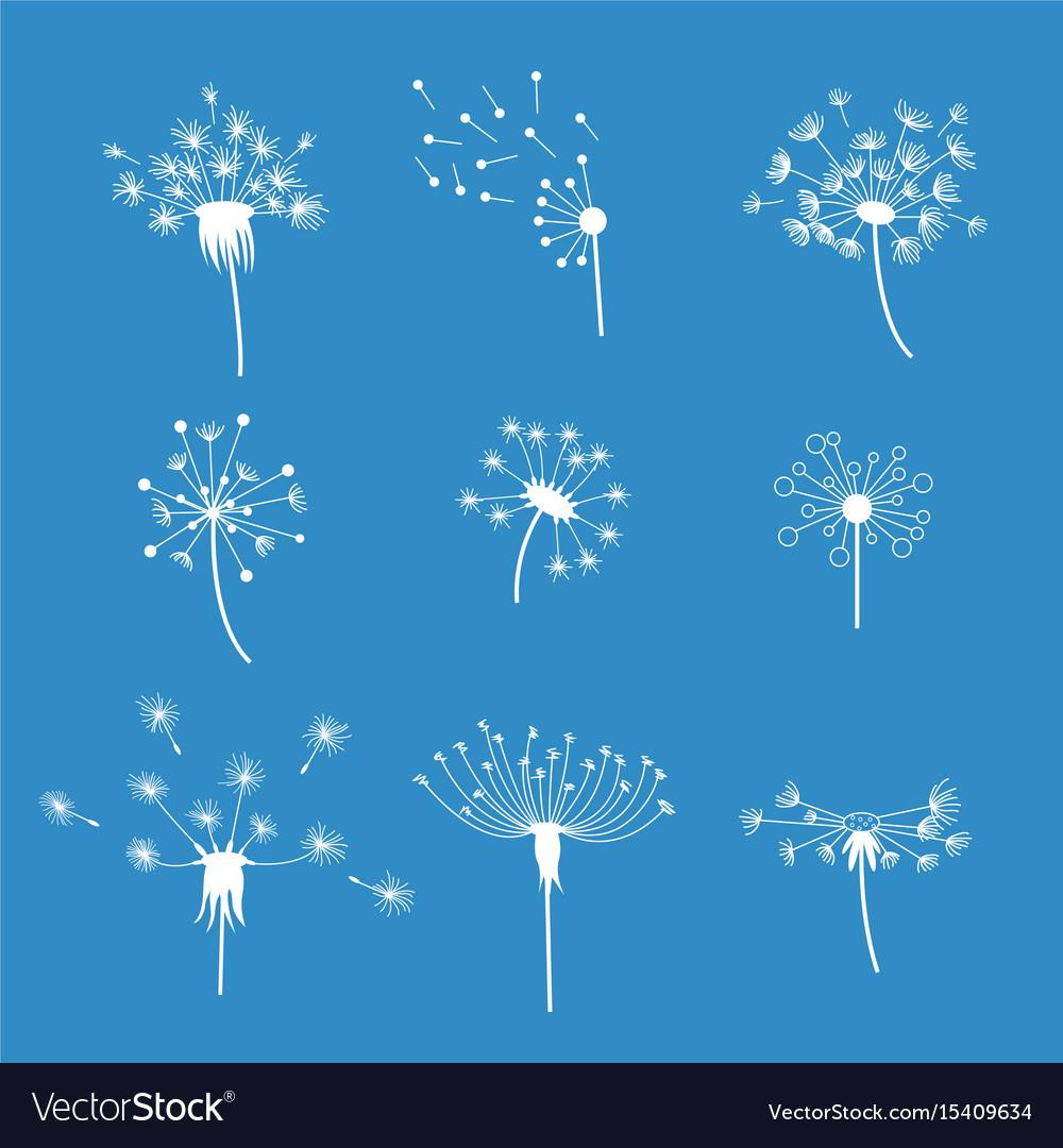 Dandelion fluffy flower and seeds set vector image