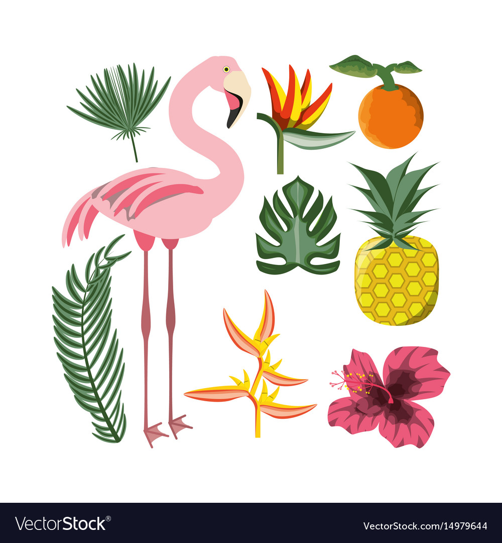 Beautiful set icon with exotic flamingo and