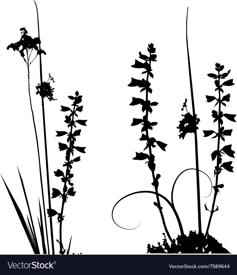 Wild plants and flower silhouettes