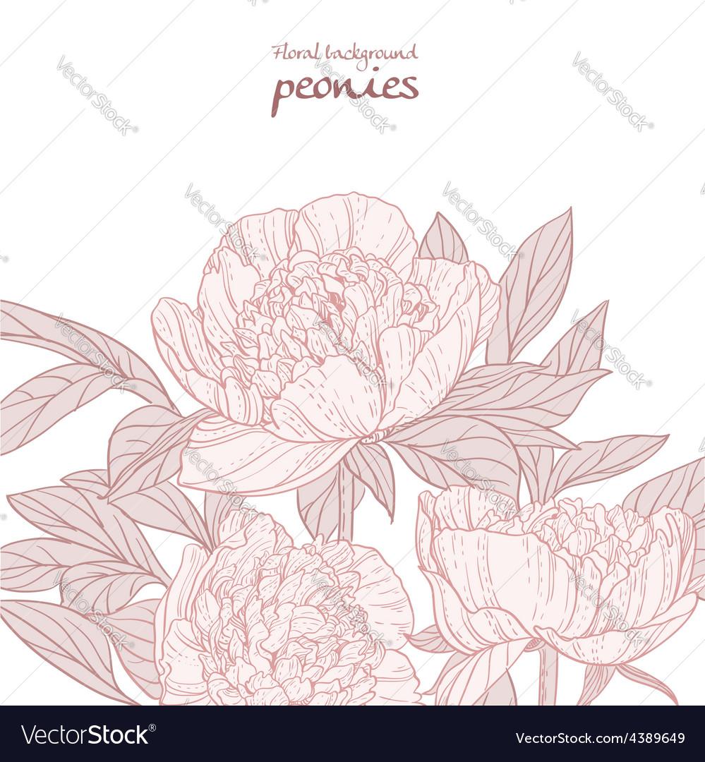 Beautiful peonies pink line art background