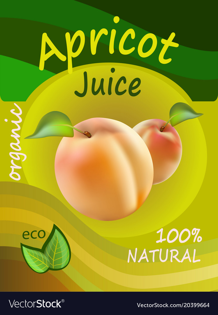 Apricot juice template packaging design ill vector image