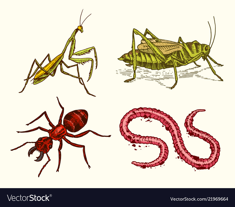 Big set insects vintage pets in house mantis