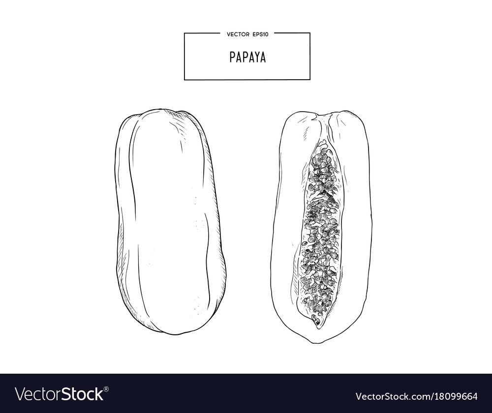 Papaya whole and half isolated on white called