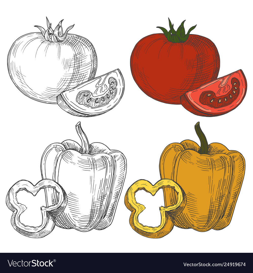 Black and white and color sketch tomatoes and