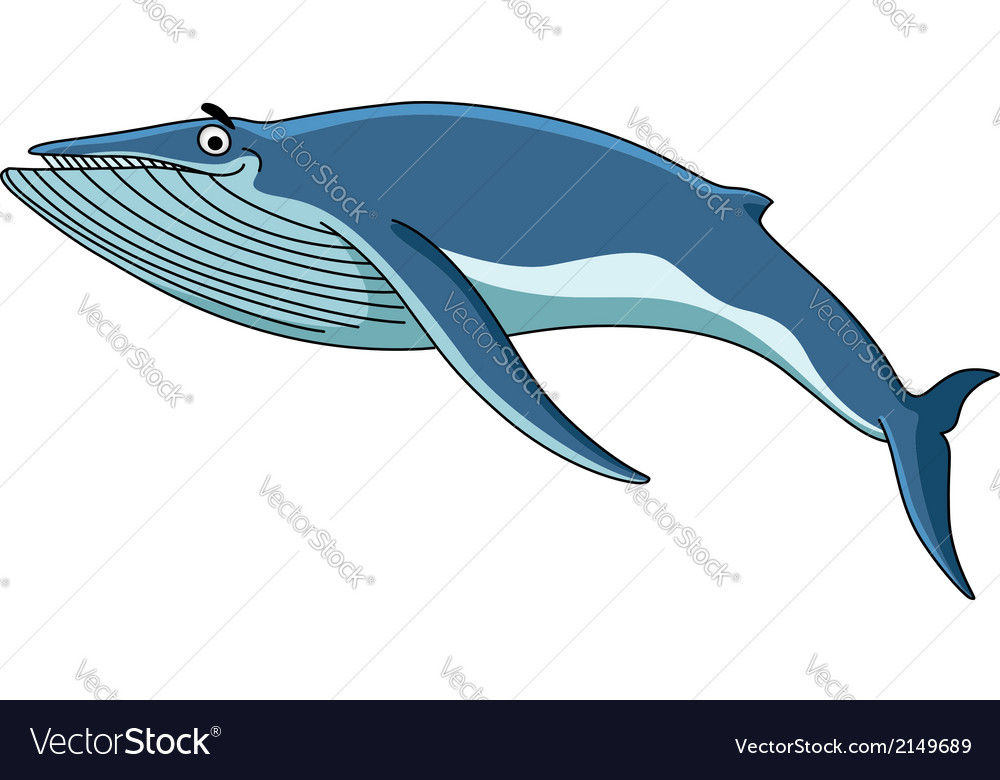 big blue baleen whale royalty free vector image