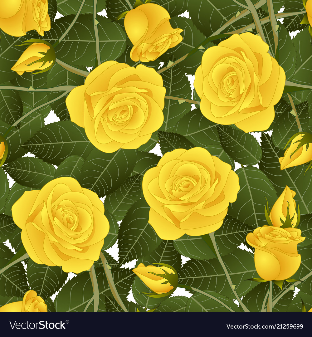 Yellow rose and green leaves on white background