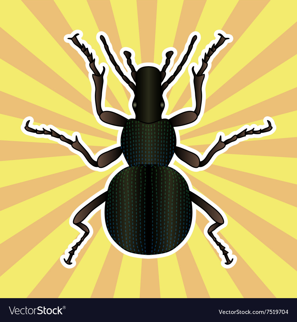 Insect anatomy Sticker ground beetle bug Vector Image