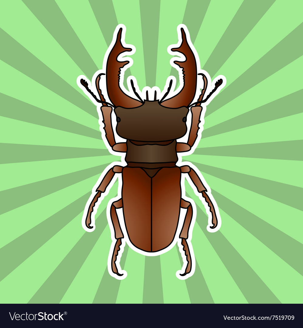 Insect anatomy Sticker stag-beetle Lucanus Vector Image