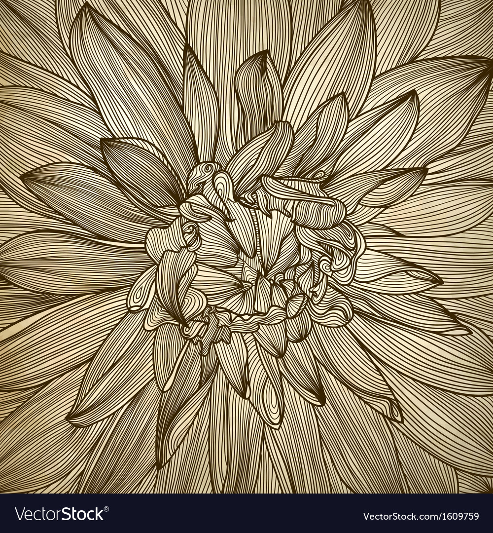Drawing Of Dahlia Flower Royalty Free Vector Image