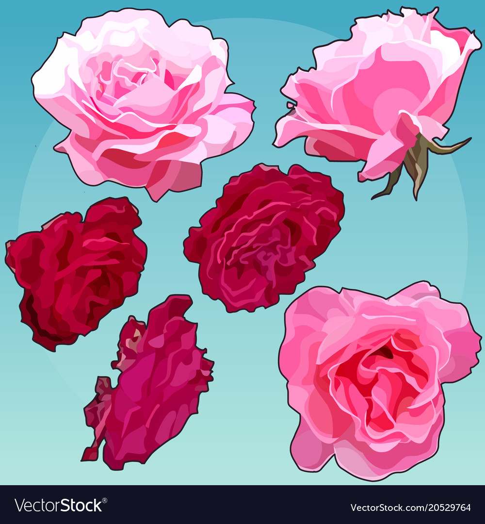 Set Of Painted Rose Flowers Pink And Light Pink Vector Image
