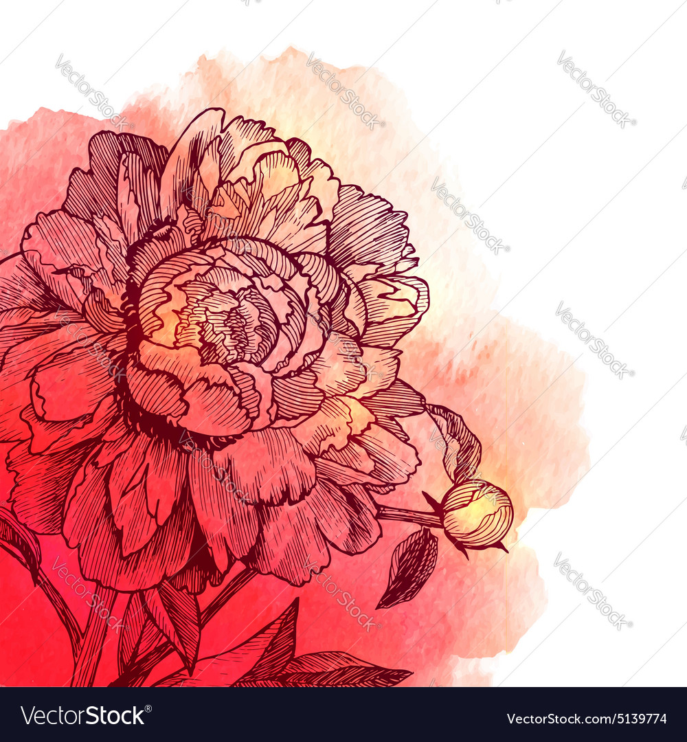 Ink drawn peony on red watercolor