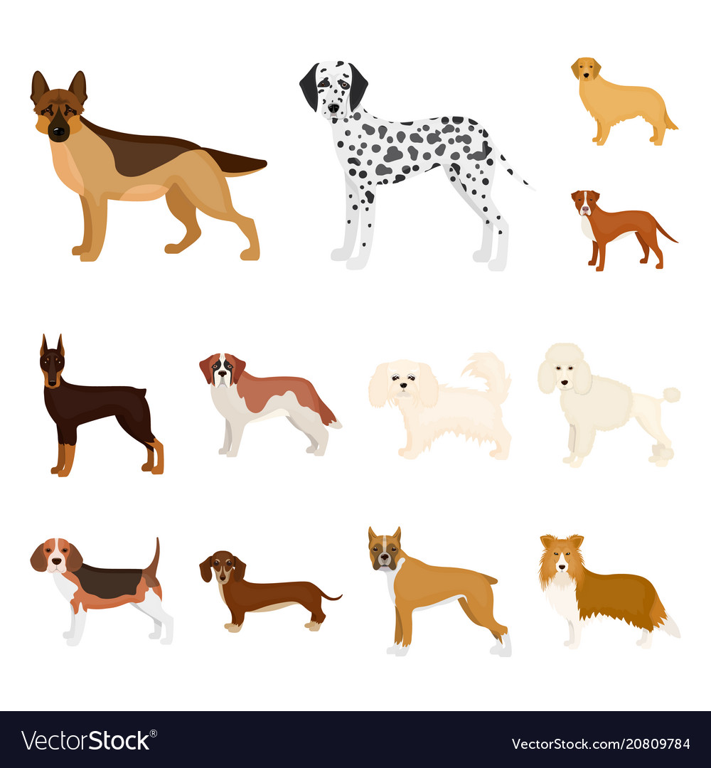 Dog breeds cartoon icons in set collection for