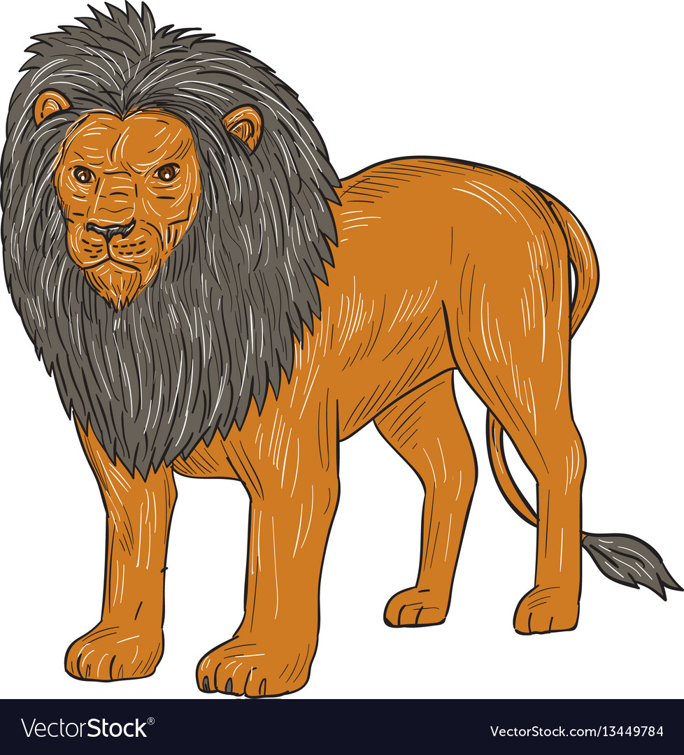 Lion hunting surveying prey drawing
