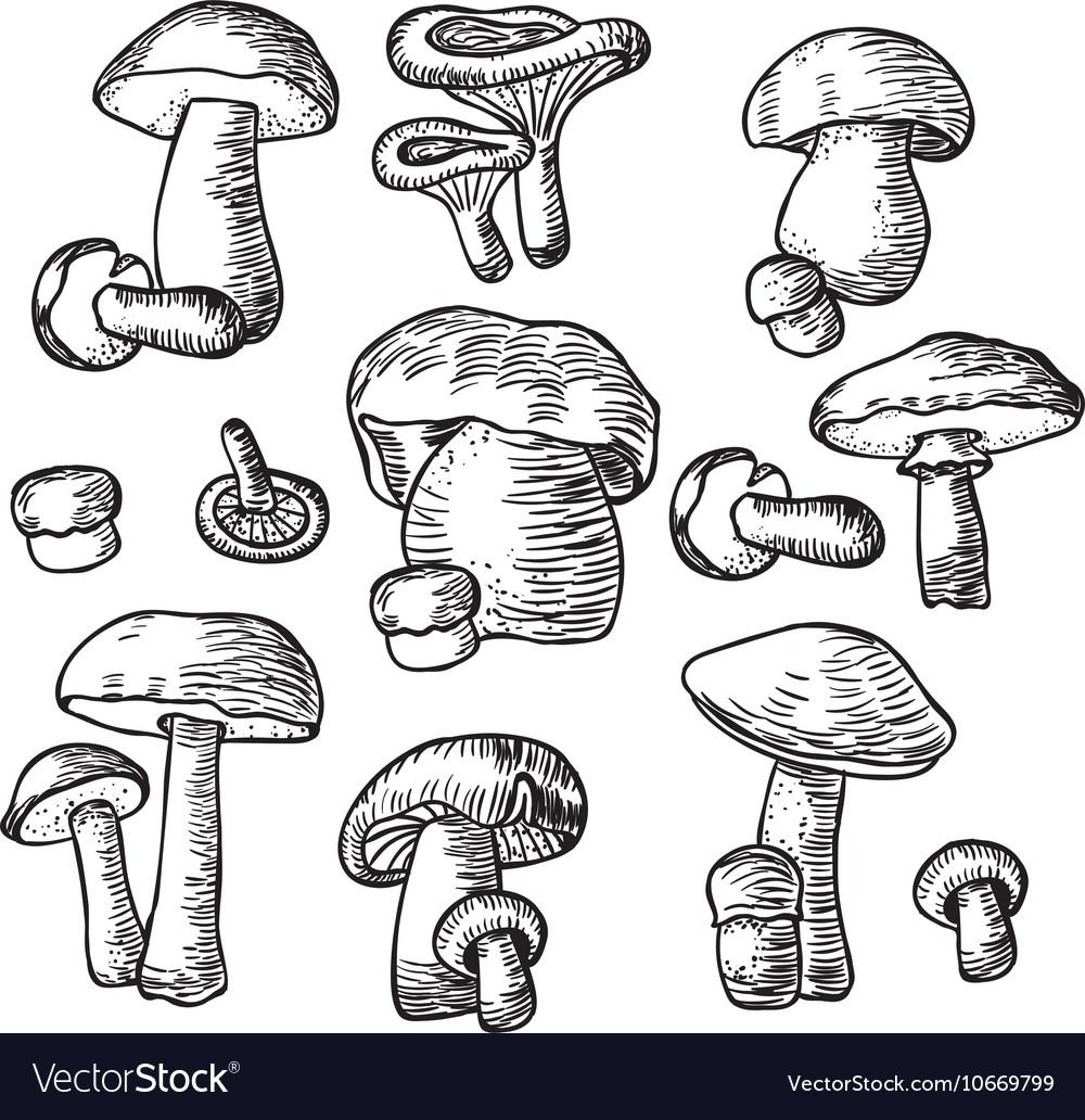 Mushrooms set Compilation of